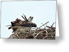 Nesting At Walmart Greeting Card