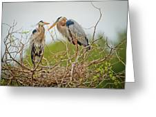 Nesting Blue's Greeting Card