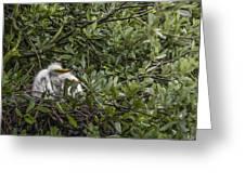 Nesting Chicks Greeting Card