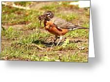Nesting Collection ... Montana Art Photo Greeting Card