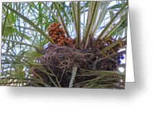 Nesting Dove Greeting Card