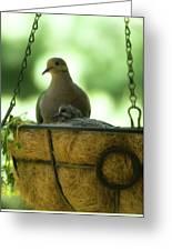 Nesting Doves, Hanging Basket, Balcony Garden, Hunter Hill, May  Greeting Card