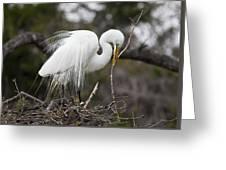 Nesting Great Egret Greeting Card
