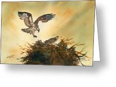 Nesting Ospray Greeting Card