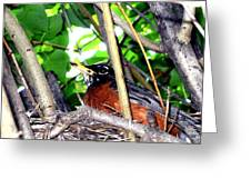 Nesting Robin Greeting Card