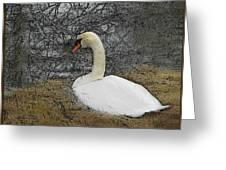 Nesting Swan Greeting Card