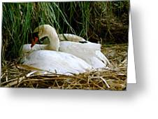 Nesting Swans Greeting Card