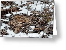 Nesting Woodcock She Survived Her Eggs From The Snow Greeting Card