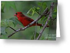 Nestled In The Trees Greeting Card