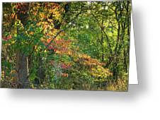 Nestled In The Woods Greeting Card
