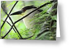Nestled Night Heron Greeting Card