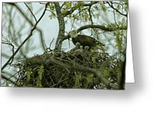 Nestlings Greeting Card