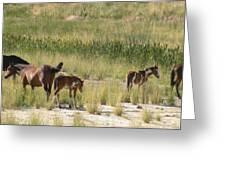 Nevada Family Greeting Card