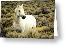 Nevada Wild Horses 3 Greeting Card