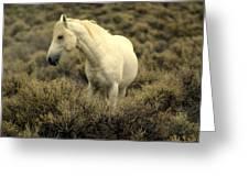 Nevada Wild Horses 4 Greeting Card