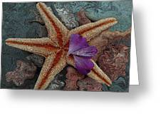 Never Forgotten- Starfish Art Greeting Card