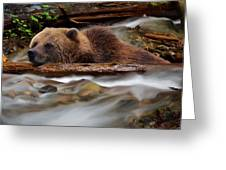 Never Give Up - Wilderness Art Greeting Card