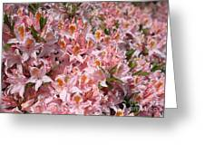 Neverending Azaleas Greeting Card