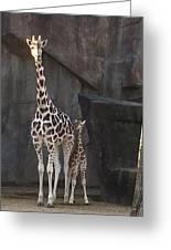 New Baby Giraffe Greeting Card