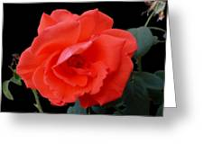 New Bloom Greeting Card