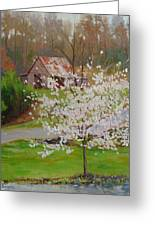 New Blossoms Old Barn Greeting Card