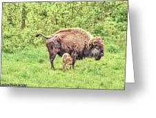 New Born Bison Greeting Card