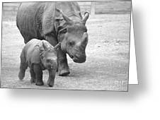 New Born Rhino And Mom Greeting Card