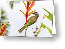 New Caledonia Honeyeater Greeting Card