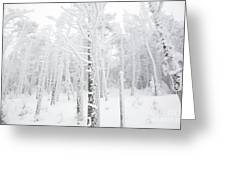 New England - Snow Covered Forest Greeting Card