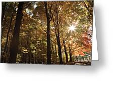 New England Autumn Forest Greeting Card