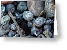 New England Beach Shells Greeting Card