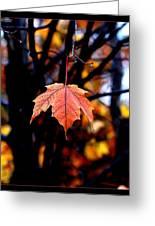 New England Fall - Lone Greeting Card
