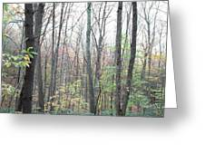 New England Forest Greeting Card