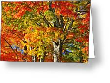 New England Sugar Maples Greeting Card