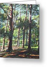 New Forest Trees With Shadows Greeting Card