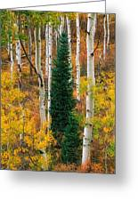 New Forests Greeting Card