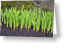 New Green Spring Shoots Greeting Card