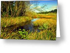 New Growth At The Pond Greeting Card
