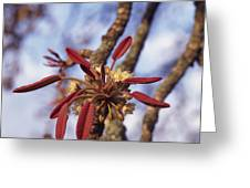 New Growth On A Shea Tree.  A Flower Greeting Card