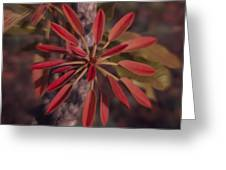 New Growth On A Shea Tree Greeting Card
