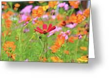 New Jersey Wildflowers Greeting Card