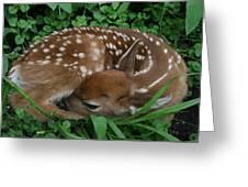 New Life  Greeting Card