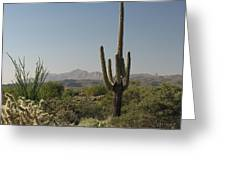 New Mexican Desert Greeting Card