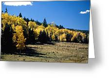 New Mexico Aspen Greeting Card