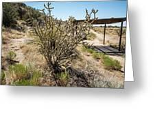 New Mexico Cholla Greeting Card