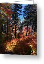 New Mexico Foliage Greeting Card