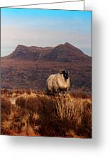 New Monarch Of The Glen Greeting Card