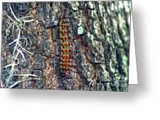 New Orleans Buck Moth Caterpillar Greeting Card
