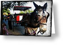 New Orleans Carriage Ride Greeting Card