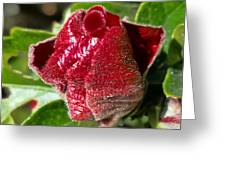 New Red Hibiscus Greeting Card